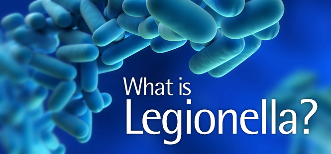 Legionella – What you need to know.